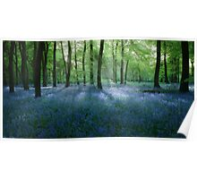 Bluebell Woodlands Poster
