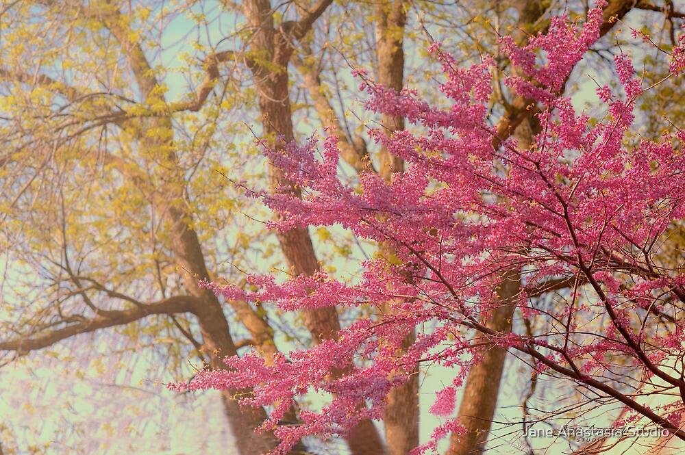 ...dancing pink amongst the trees..... by Jane Anastasia Studio