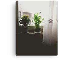 Love grows everyday Canvas Print