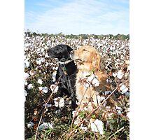 Cotton Field Puppies  Photographic Print