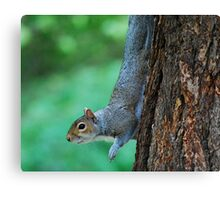 Just Hanging Out Canvas Print