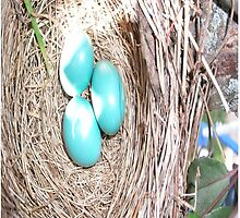 Robbin Egg Case by CodysPhotos