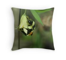 Bee on Straw Lily Throw Pillow