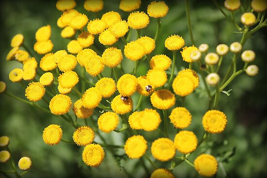 Yellow Flowers and Critters!! by WeeZie