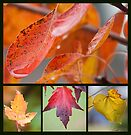 Colours of Autumn by Linda Lees