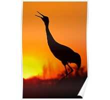Sandhill Crane Calling During Sunset. Poster