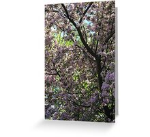Blossoms in Spring Greeting Card