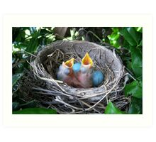 Two Robins In The Nest Art Print