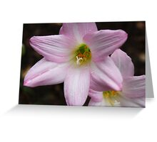 Pink flowers covered in dew Greeting Card