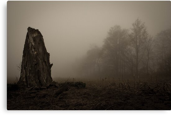 old dead tree  by Erin Fitzgibbon