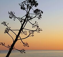 Cretan sunrise by Agnes McGuinness