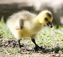First Steps by Heather King