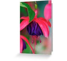 Fabulous Fuschia Greeting Card