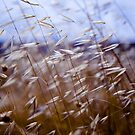 grass on blue by waitin&#x27; for rain