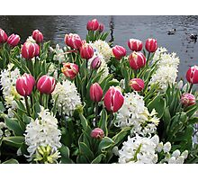 Flowers and Feathers - Keukenhof Gardens Photographic Print