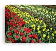 Tulips on Parade - Keukenhof Gardens Canvas Print