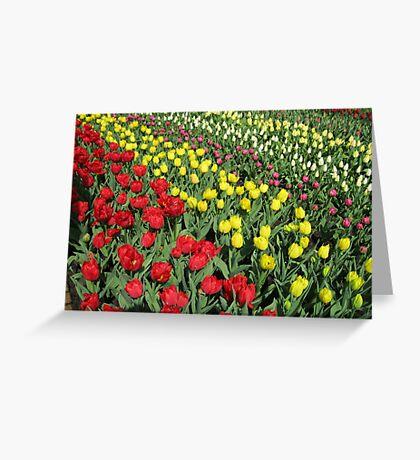 Tulips on Parade - Keukenhof Gardens Greeting Card