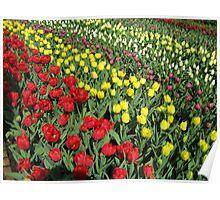 Tulips on Parade - Keukenhof Gardens Poster