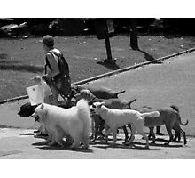 The Dog Walker Photographic Print