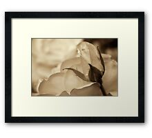 Romance in  sepia Framed Print