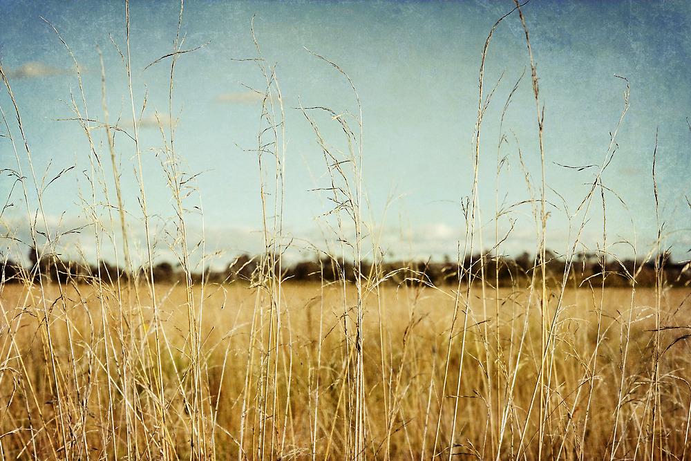 Rustle.... by Carol Knudsen
