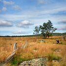 Rustic Rurality ~ Ulandra Reserve NSW by Rosalie Dale