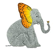 Elephant and Butterfly Photographic Print