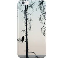 Bald Eagle-Signed-3072 iPhone Case/Skin