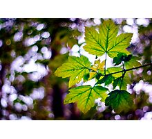 Just leaves and bokeh Photographic Print