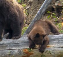 Black Bear And Cub-Signed-7768 Sticker