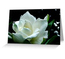 Gardenia Garden Greeting Card