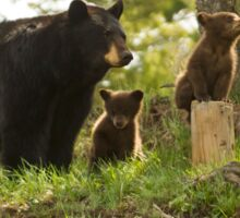 Black Bear Sow And Twins-Signed-0272 Sticker