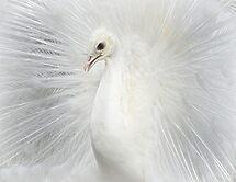 The beauty of White  by Johanna26