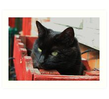 Jenny in the WindowBox : so much for flowers !! Art Print