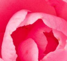 Macro Camellia Sticker