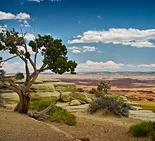 View from a Mesa by Randall Nyhof