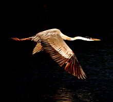 It's Time for Me to Fly... by Karen  Helgesen