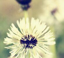 Dandelions by Falko Follert