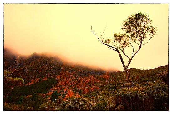 Fagus at Cradle Mountain by Jocelyn  Parry-Jones