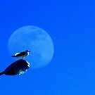 Moonbird by Mistyarts