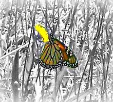 Monarch & Dandelion by Lisa Taylor