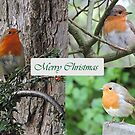 Robin Trio by CreativeEm