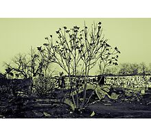 Tree In The Words Photographic Print