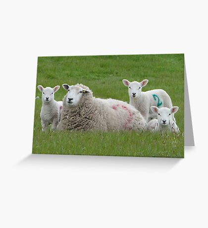 Hey! Are Ewes Looking At Me? Greeting Card