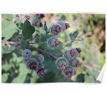 sting flowers purple green Poster
