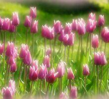 Tulips in the Garden by Lucinda Walter