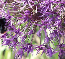 Bee & Purple flower by Florem