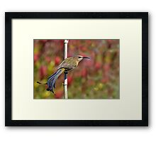 Point of View....... Framed Print