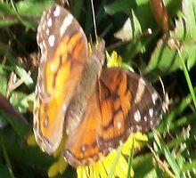 Butterfly Case by CodysPhotos