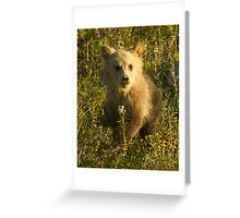 Grizzly Cub-Signed-3966 Greeting Card
